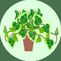 Money Money Plants Online