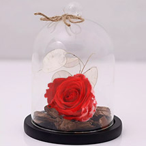 Red Forever Rose In Glass Dome: