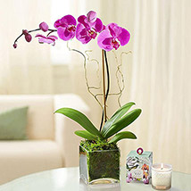 Purple Orchid Plant In Glass Vase: Best Mother's Day Gifts