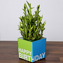 3 Layer Bamboo Plant For Birthday: Plants In Dubai